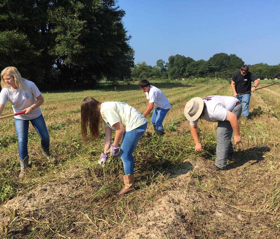 FFA member harvest crop