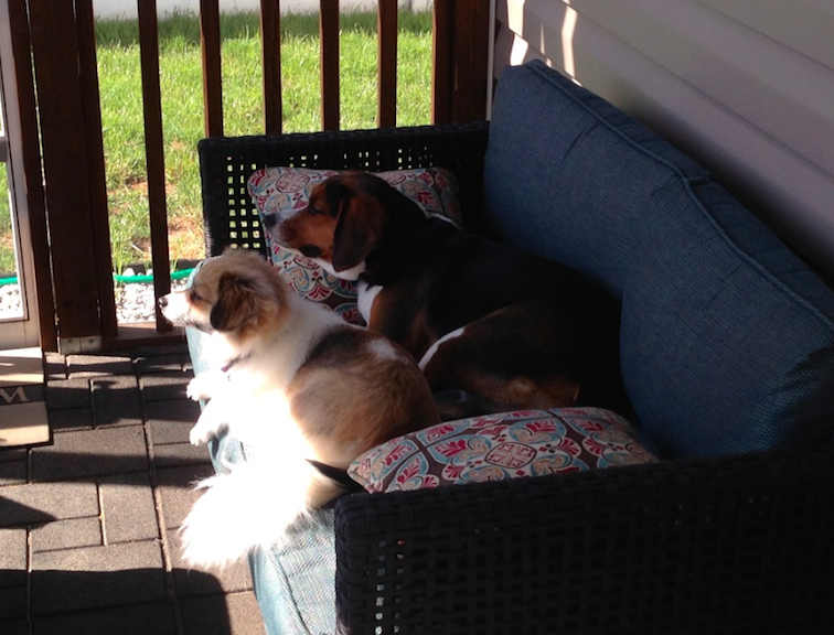Mrs. Johnson's Dogs
