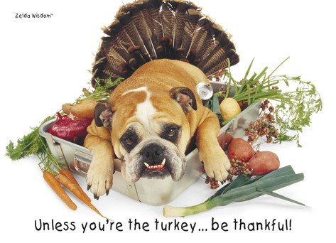 "This image is of a bulldog in a pan of veggies, with the caption: ""Unless you are the turkey, be thankful."""