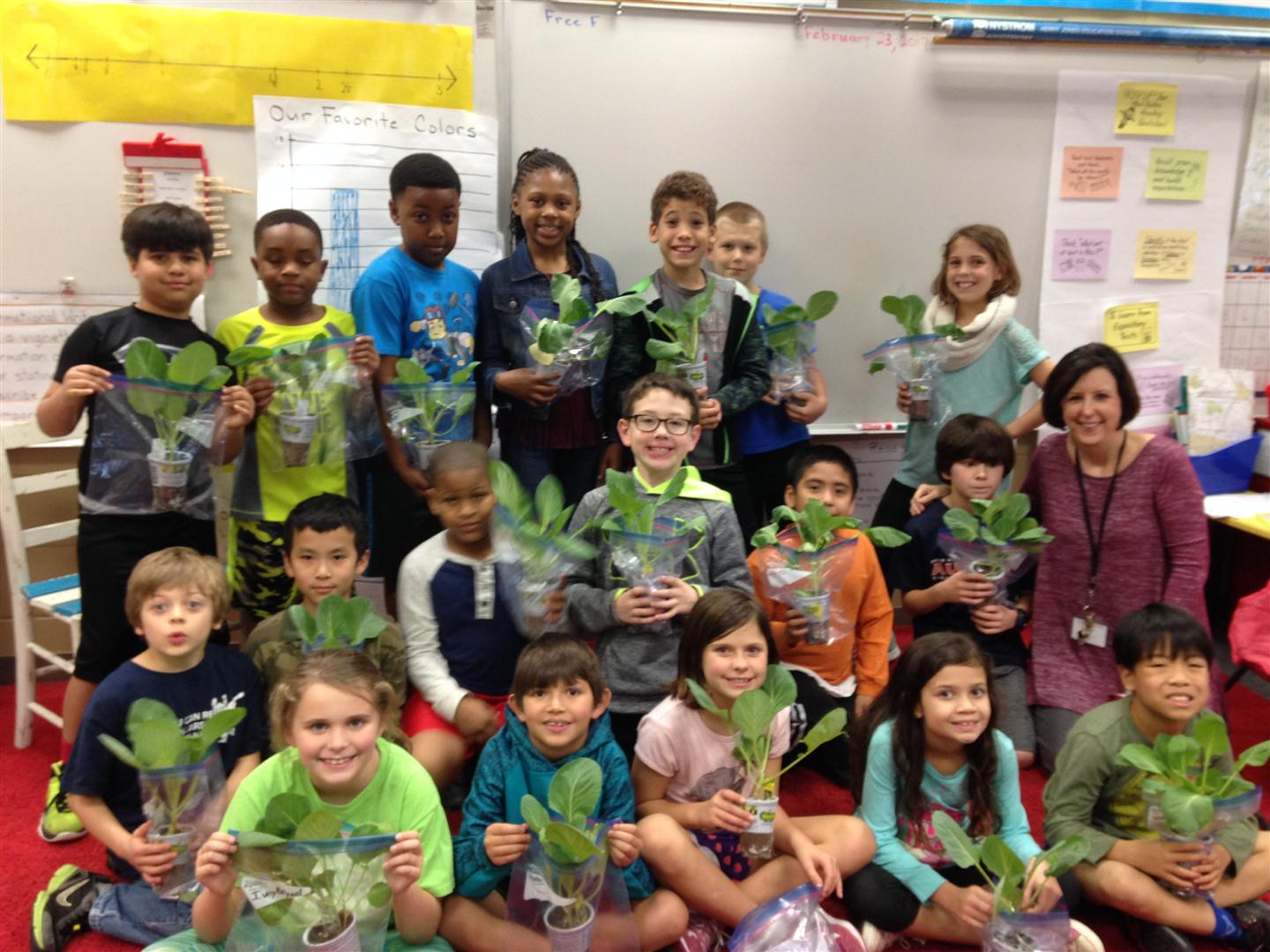 Mrs. Marcum's 3rd grade class receives mega cabbage plants from Bonnie Plants as part of the 3rd Grade Cabbage Program.