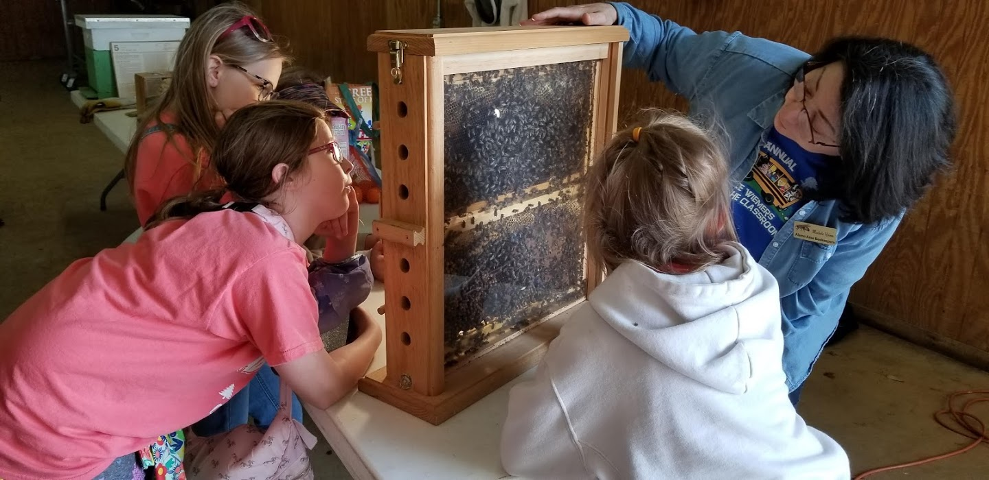 4th Grade learn about bees