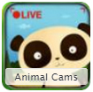 Animal Webcams