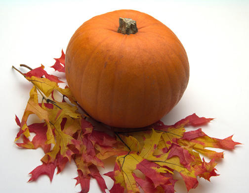 http://images.pcmac.org//images/SiS/Seasons//Fall%20Pumpkin.JPG