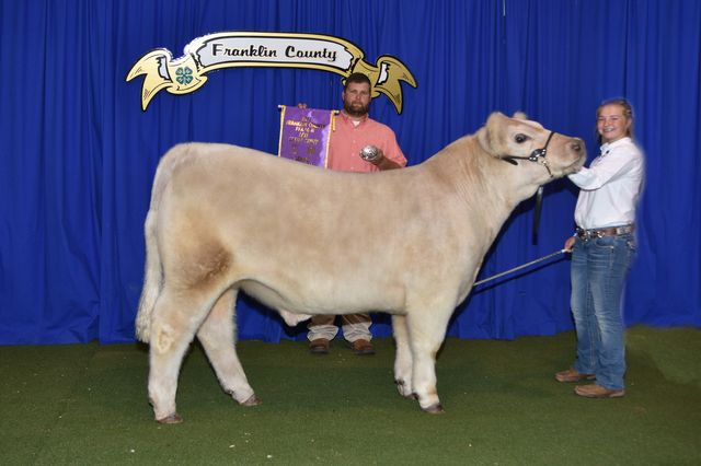 Grand Champion Market Steer exhibited by Ginger Mitchell
