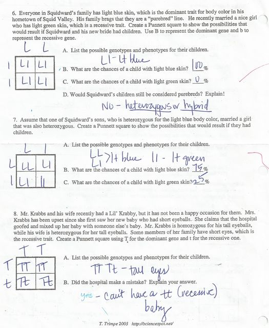 Worksheets Bikini Bottom Genetics Worksheet pierce county middle teachers file manager download