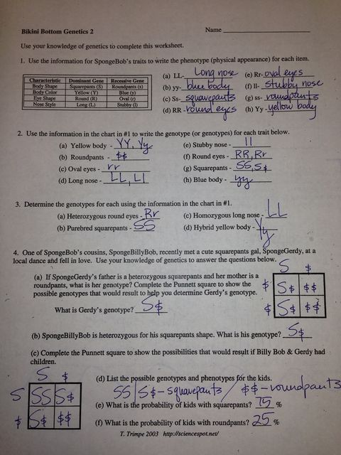Monohybrid Crosses Ex les additionally Also Ge Ics Worksheet Answer ...