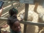 View Gulf Shore Zoo 2013